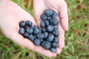 Berries as Antioxidants for Good Health